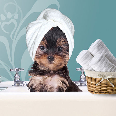 Natural Grooming Products For Dogs